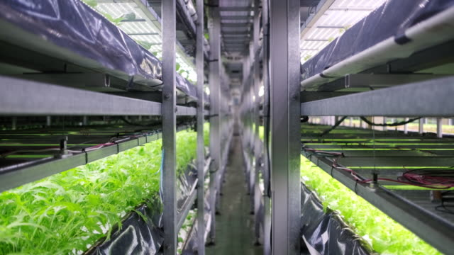 racks of cultivated plant crops at indoor vertical farm - sustainability video stock e b–roll