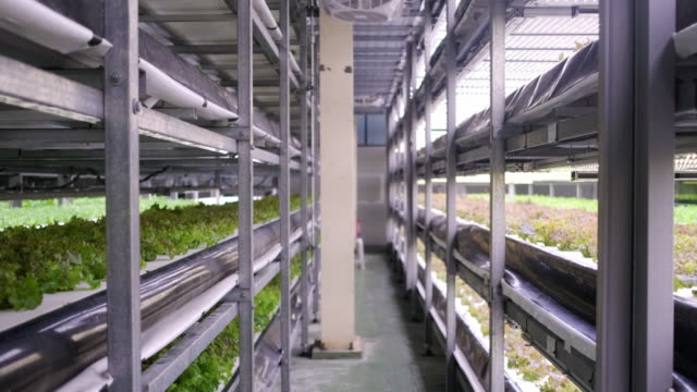 Racks of Cultivated Plant Crops at Indoor Vertical Farm An indoor farming facility offers a promising look into a future where sustainable development goals are met. hydroponics stock videos & royalty-free footage