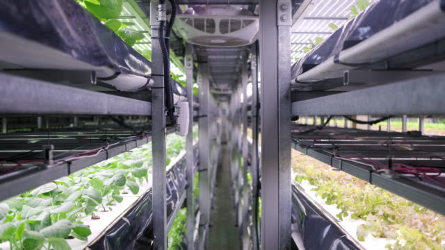 vidéos et rushes de racks of cultivated plant crops at indoor vertical farm (en plus) - biotechnologies