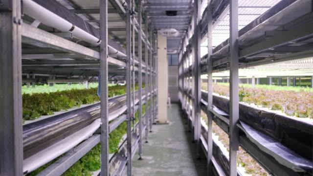 racks von kultivierten pflanzenpflanzen auf der vertikalen indoor farm - gewächshäuser stock-videos und b-roll-filmmaterial