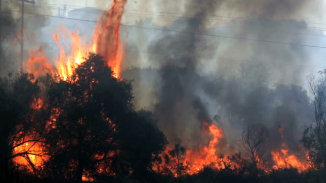 Raging Bushes and Trees on Fire in Southern California A shot from the recent fires in Southern California. This clip was taken near Oceanside, CA.  california stock videos & royalty-free footage