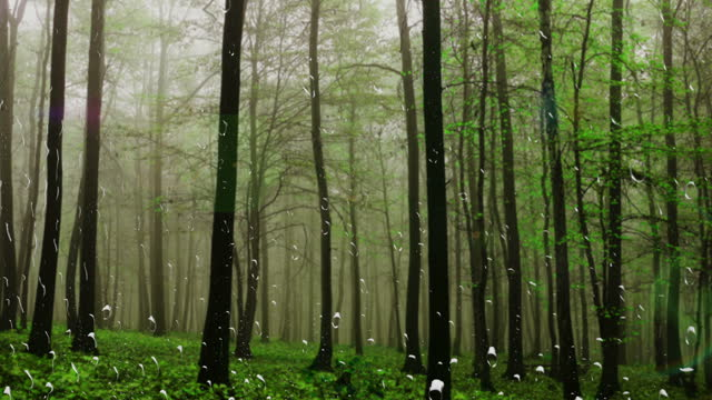 Rain against a forest. View from the window. Raindrops on the glass. video