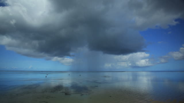 Rain and dogs Rain over the ocean, Time lapse. Low tide, calm water, dogs running around on the water. There is reflection of clouds on the water. indian ocean stock videos & royalty-free footage