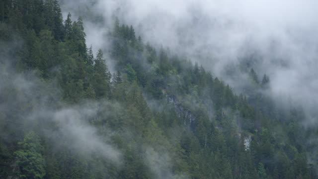 regnmoln rullande över tallar täckta kullar i schweiz - wengen bildbanksvideor och videomaterial från bakom kulisserna