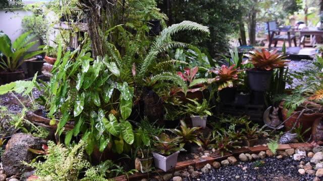 Rain drop falling in green garden tropical rain season