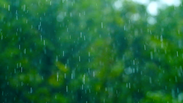 rain drop falling with green nature - ogród formalny filmów i materiałów b-roll