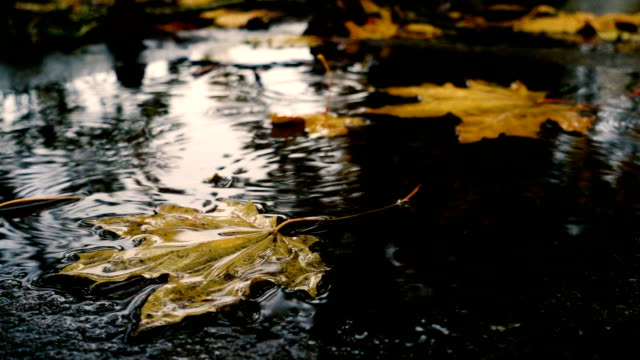 rain drops falling at the puddle with the yellow maple leaves video
