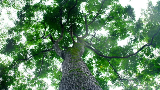 森の木から降る雨 - ローアングル点の映像素材/bロール