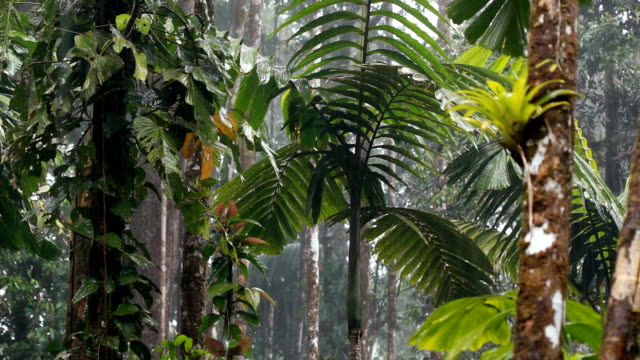 Rain falling in the interior of tropical rainforest In the Ecuadorian Amazon amazon stock videos & royalty-free footage