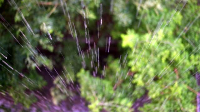Rain falling on a leaf