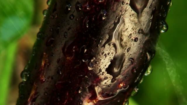 pioggia cadere sui melanzana 2 - melanzane video stock e b–roll