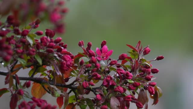Rain falling on flowered branch