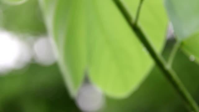 Rain falling on leaf of tree video