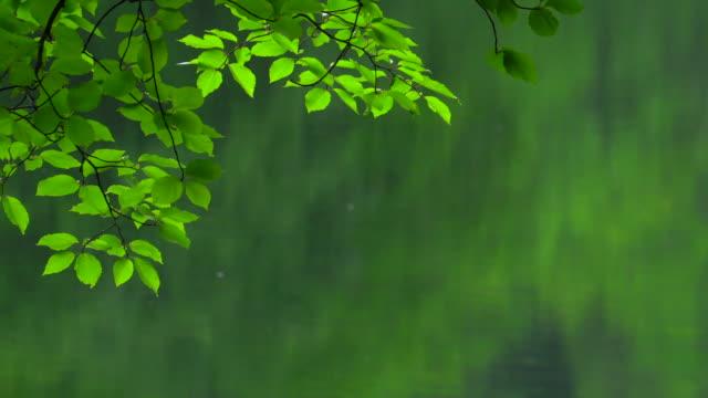 Rain falling on the green lake