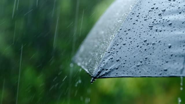 vídeos de stock e filmes b-roll de rain falling on umbrella - guarda chuva