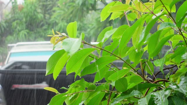 rain fell on the lush green leaves of the village