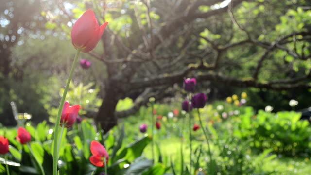 rain flowers tree garden video
