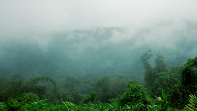 Rain Forest Clouds Time-Lapse video