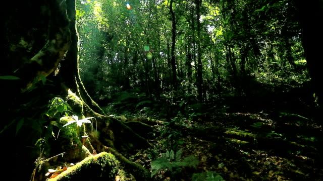 熱帯雨林、ドリー撮影 - 雨林点の映像素材/bロール