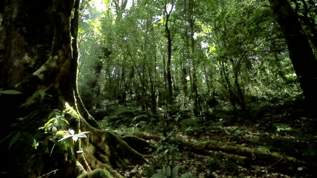 Rain forest, dolly shot video