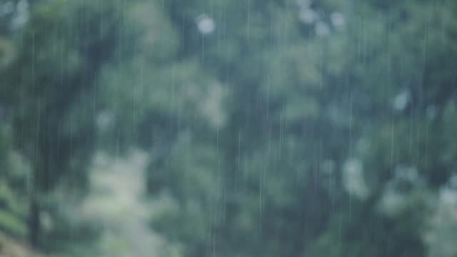 Rain Heavily Pouring In The Green Forest Of Munnar Located In Kerala State, India. -wide shot