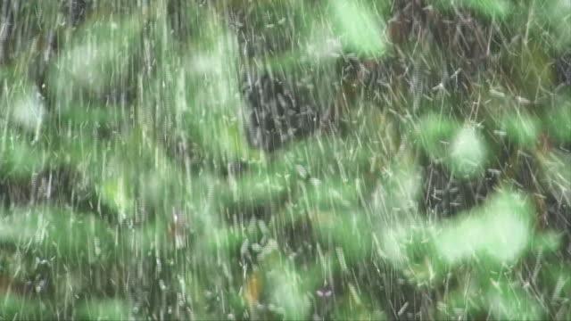 pioggia come prendere - grandine video stock e b–roll