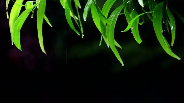 Rain & Nature - vídeo