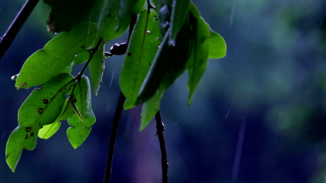 rain & nature - monsone video stock e b–roll