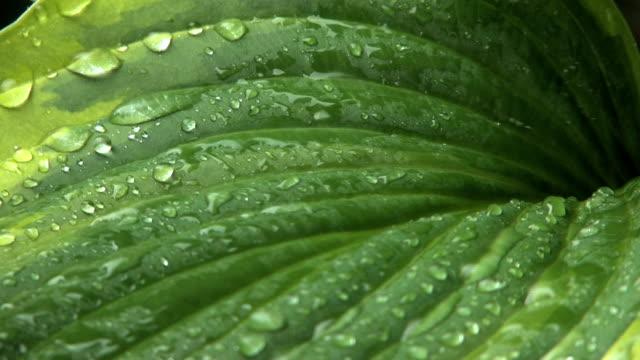 Rain on Leaves 2 video