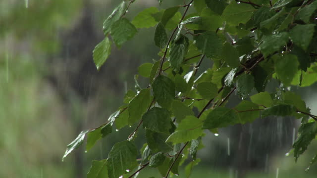 stockvideo's en b-roll-footage met rain on leaves - minder dan 10 seconden