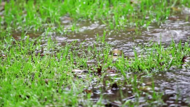 vídeos de stock e filmes b-roll de rain on puddles with grass - poça