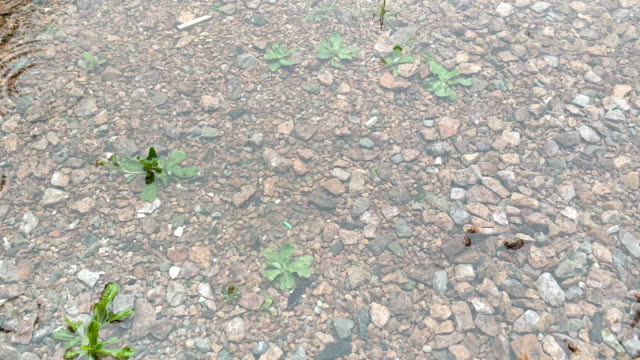 rain on the gravel