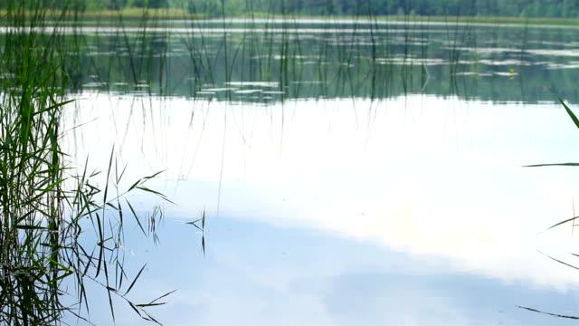 rain on the lake video