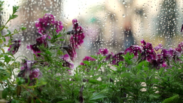 Rain outside window of summer café. Raindrops on window glass, blurring of natural light purple, ultraviolet flowers halftones, beautiful bokeh behind wet city window. Abstract silhouettes people walking under umbrellas. Concept lifestyle modern city video