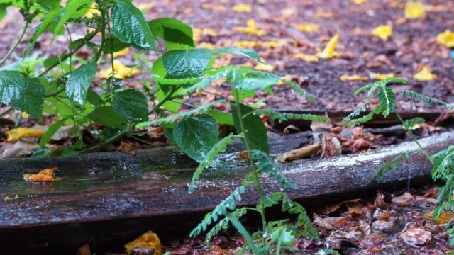regen strömte auf den boden und blätter während der regenzeit. - indochina stock-videos und b-roll-filmmaterial