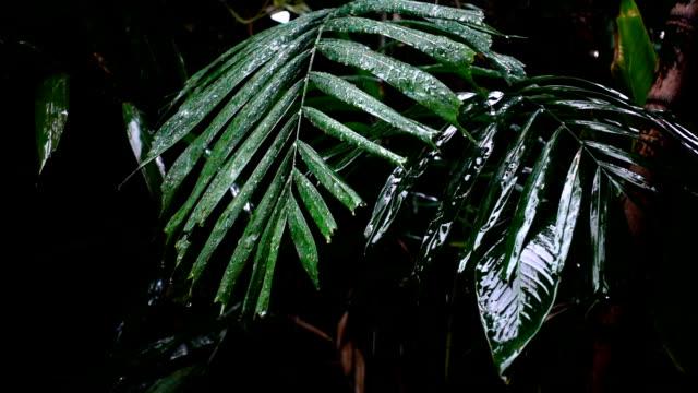 Rain water falling on green leaves slow motion with cloudy sky dark color tone video