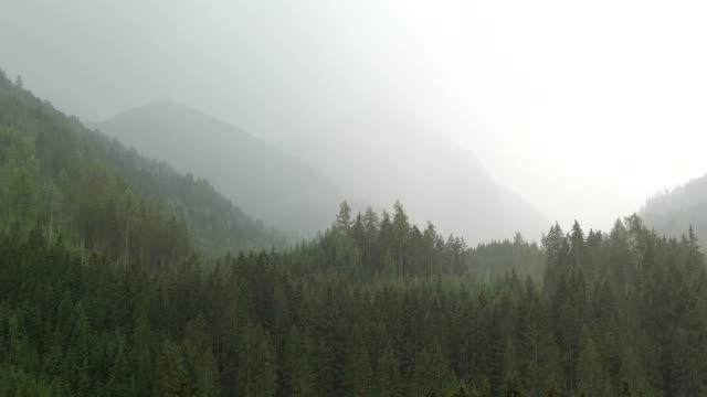 rain weather in austrian alps. big rain drops falling down. tirol. - jodła filmów i materiałów b-roll