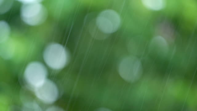 Rain with blurred trees. video