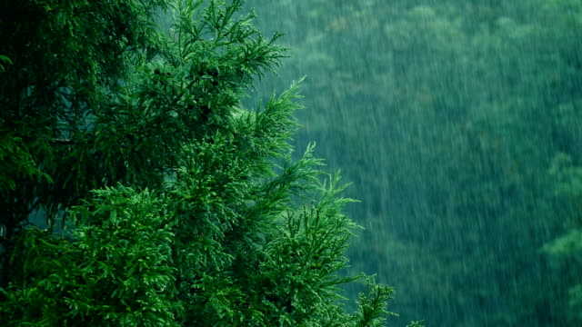 Rain with Trees background rain with Trees background pine tree stock videos & royalty-free footage