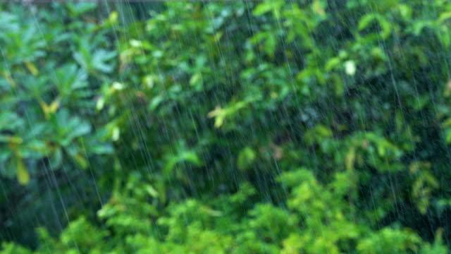 vidéos et rushes de pluie sur fond d'arbres tropicaux. - desastre natural