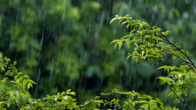 Rain with tropical trees background