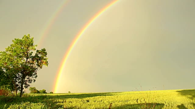 Rainbow above wheat field in farmland in rural countryside video