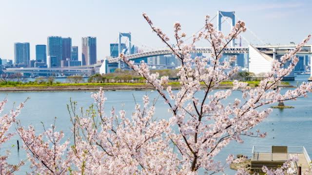 rainbow bridge och cherry blommor i tokyo japan - odaiba kaihin koen bildbanksvideor och videomaterial från bakom kulisserna