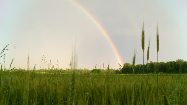 HD DOLLY: Rainbow Over Field Of Barley video