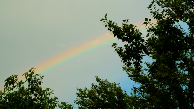 Rainbow over the trees beautiful rainbow at the sky saturated color stock videos & royalty-free footage