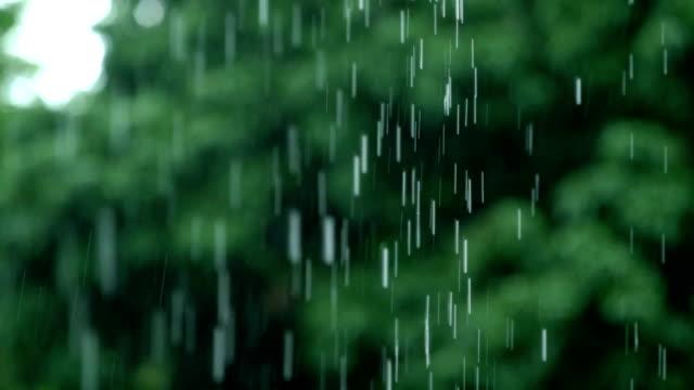 4 k の slo の mo tu レイン ドロップ、熱帯の森 - 雨点の映像素材/bロール