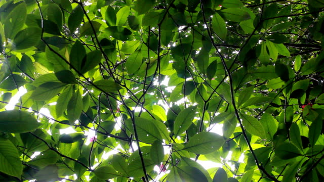 raindrops falling from the rainforest canopy - kubbe stok videoları ve detay görüntü çekimi