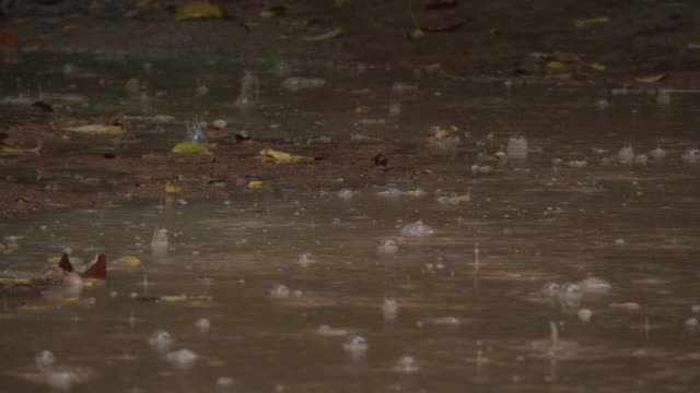 slow motion: raindrops falling into large murky puddles splash in calm forest. - monsone video stock e b–roll