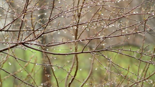 le gocce d'acqua sull'albero - albero spoglio video stock e b–roll
