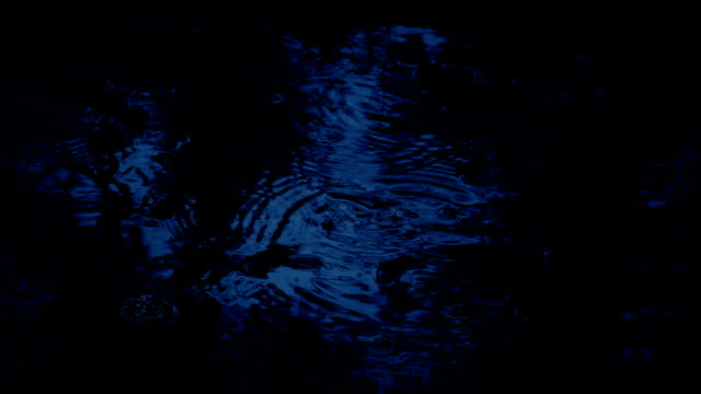 Raindrops On Forest Pool In The Dark video